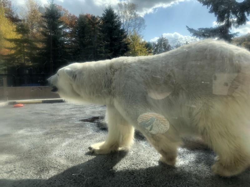 旭山動物園-あしたばデンタルクリニック公式サイトのブログ